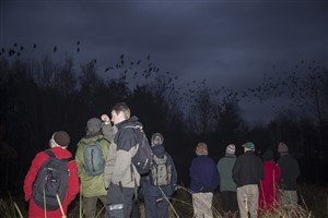 Wildlife walk to Malls Mire Jackdaw roost