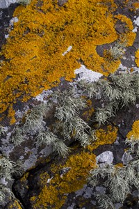 rock with orange green and white lichens